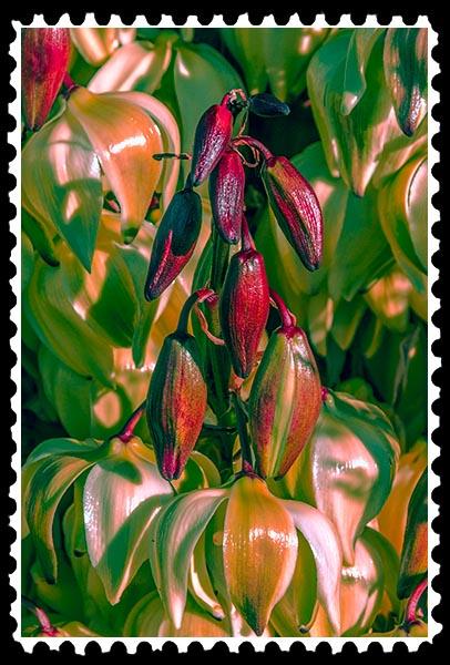 img_0291 spanish daggar stamp