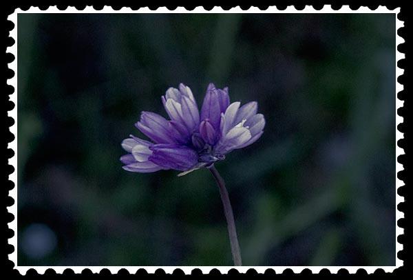 img_0318 unknown flower stamp