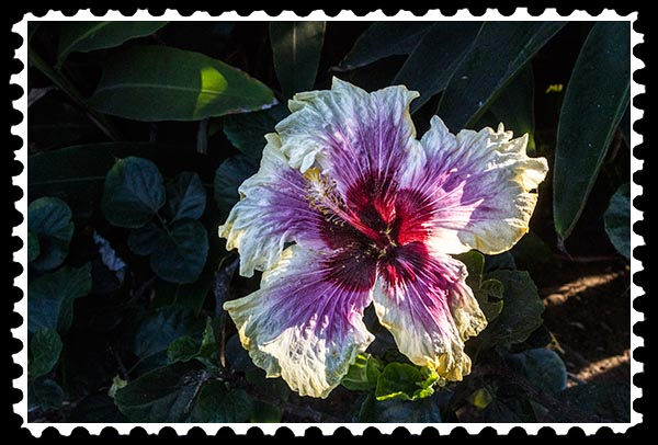 img_1086 giant hibiscus stamp
