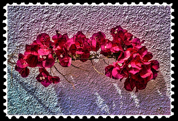 img_1676 bougainvillea stamp