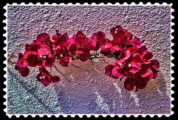 img_1676 bougainvillea stamp