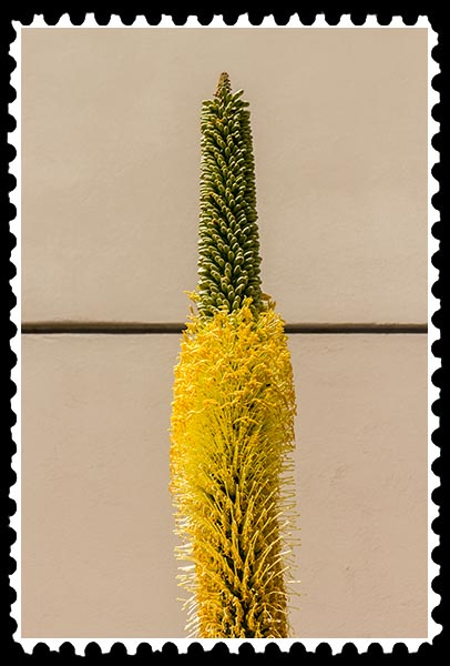 img_1681 unknown flower stamp