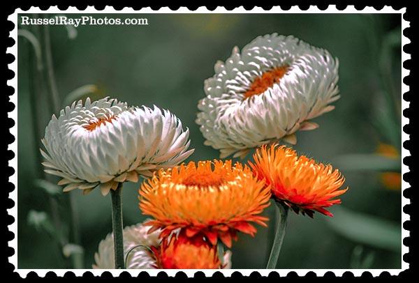 IMG_1747 faa stamp