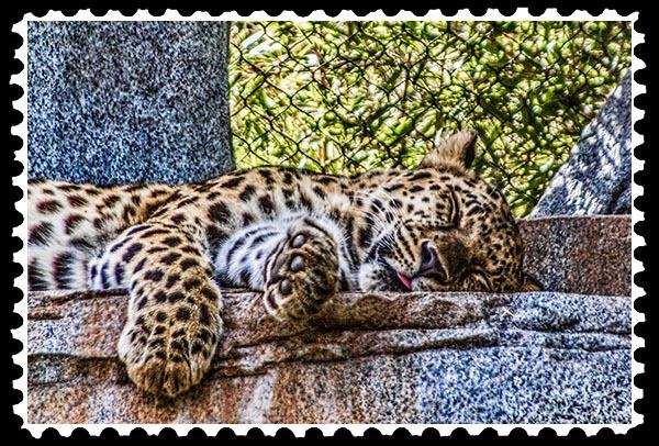 img_2208 malayan tiger stamp