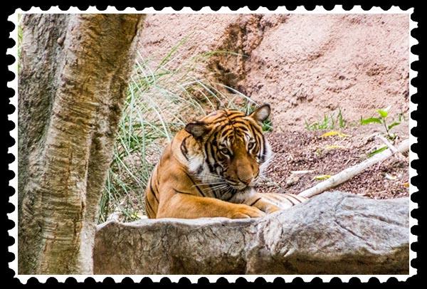 img_2240 malayan tiger stamp