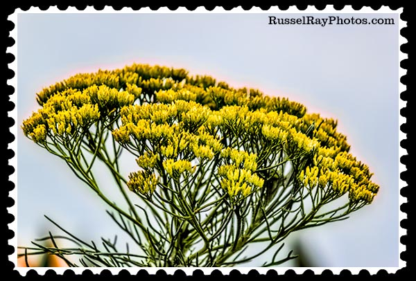 unknown flower stamp