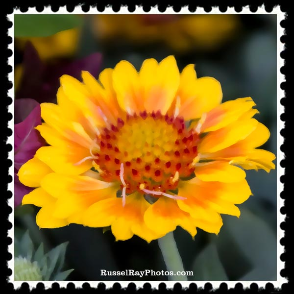 yellow flower faa stamp