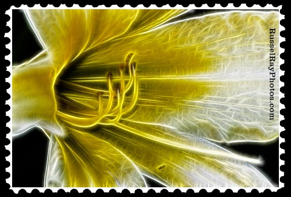 yellow lily faa stamp