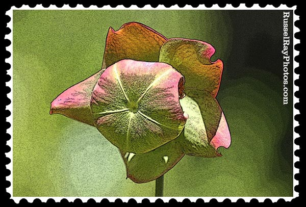 carnivorous beauty faa stamp
