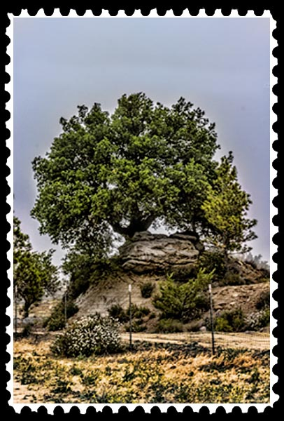 img_2036 tree boondocks stamp