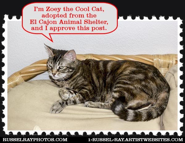I'm Zoey the Cool Cat and I approve this post