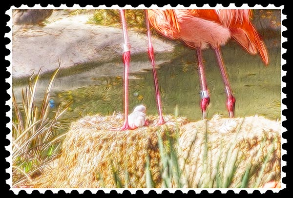 img_2198 flamingo zoo stamp