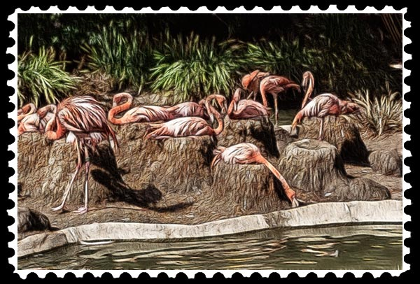 img_2199 flamingo zoo stamp