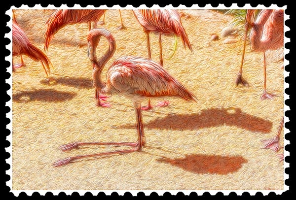 img_2200 flamingo zoo stamp