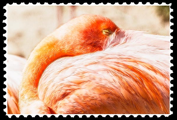 img_2201 flamingo zoo stamp
