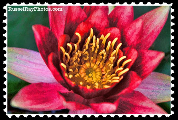 IMG_2913 water lily faa stamp