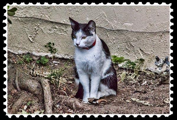 img_2952 cat stamp