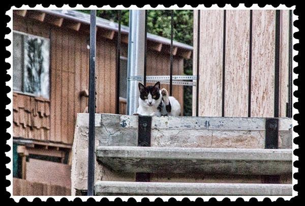 img_2961 cat stamp