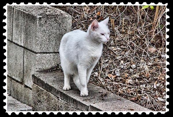 img_2963 cat stamp