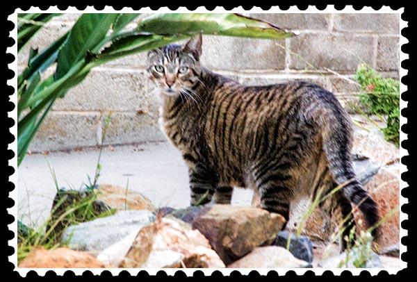 img_2970 cat stamp
