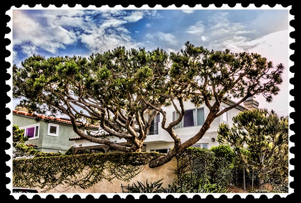 img_3025 tree la jolla stamp