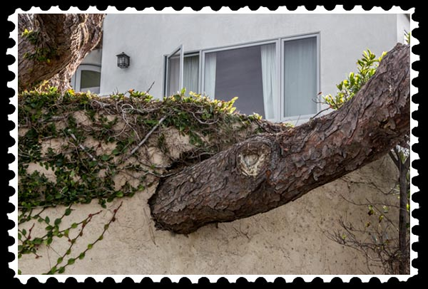 img_3027 tree wall stamp