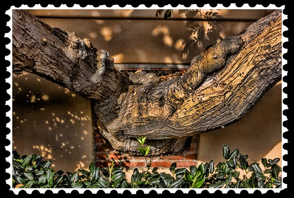 img_3040 la jolla tree stamp