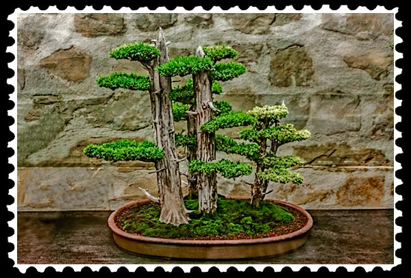 img_3201 bonsai stamp