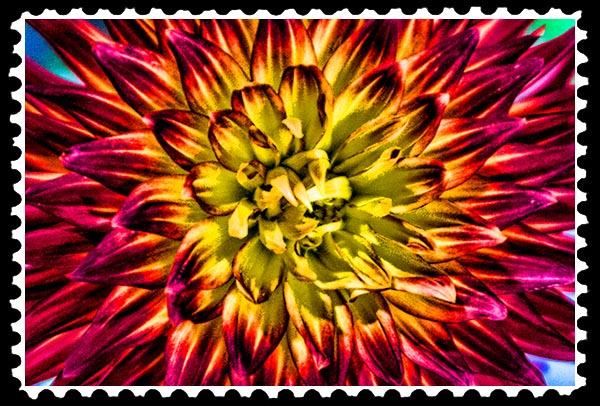 img_3215 dahlia stamp
