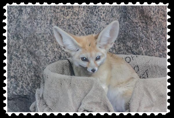 img_3862 fennic fox zoo stamp