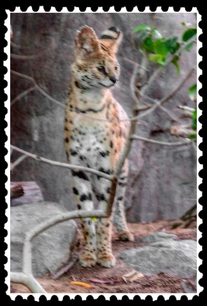 img_3914 serval zoo stamp