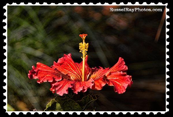 img_4375 hibiscus stamp