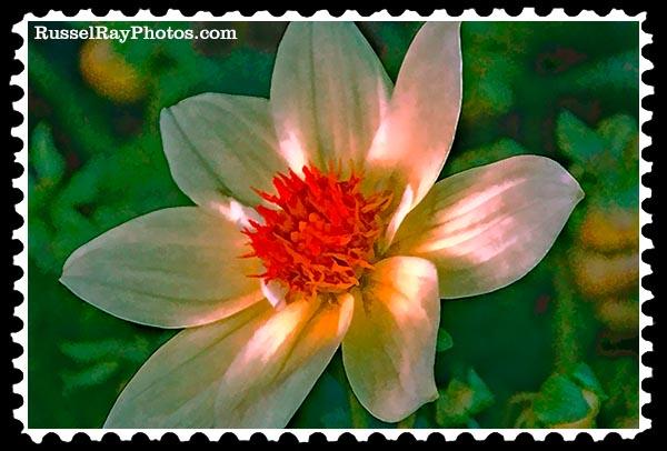 img_5158a dahlia faa stamp