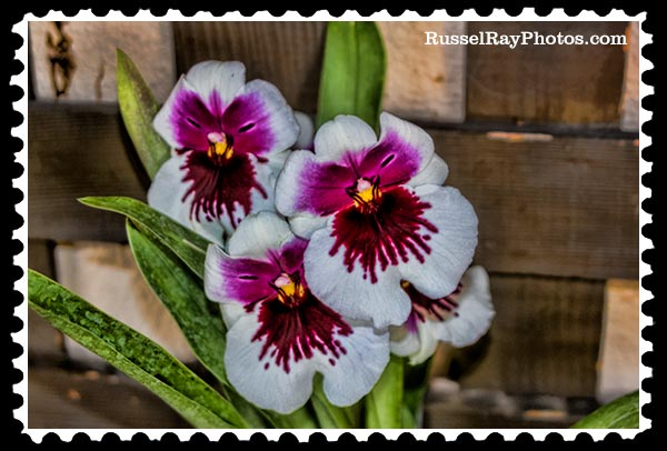 IMG_5433 orchid faa stamp