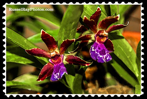 IMG_5435 orchids faa stamp