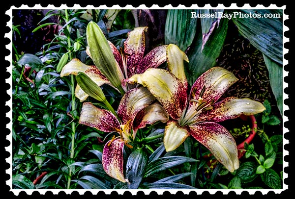 IMG_5444 day lilies faa stamp