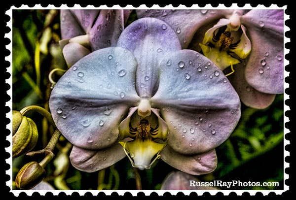 IMG_5447 orchid faa stamp