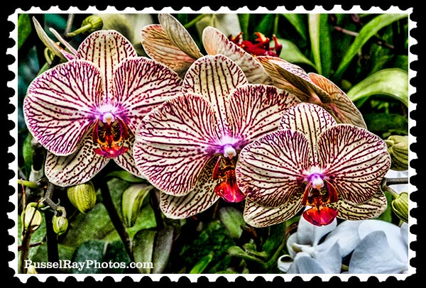 IMG_5466 orchid triplets faa stamp