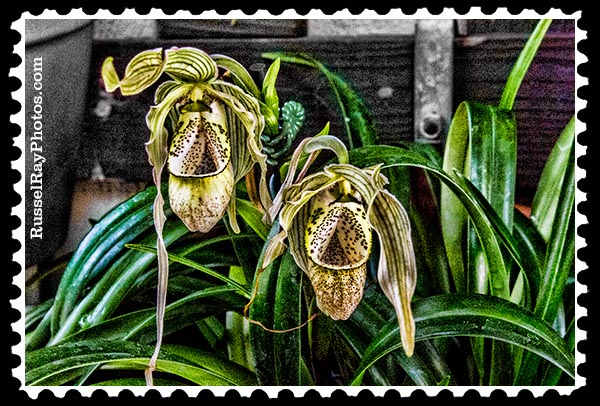 IMG_5468 orchid twins faa stamp