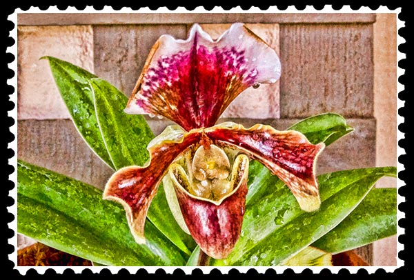 IMG_5469 orchid faa stamp