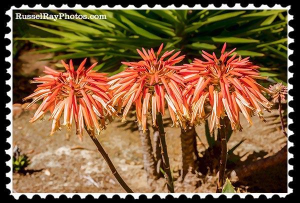 IMG_5533 triplets faa stamp