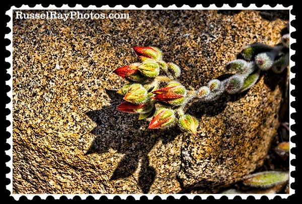 IMG_5595 faa stamp