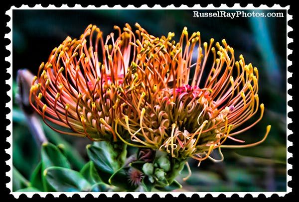 IMG_5843 pincushion faa stamp