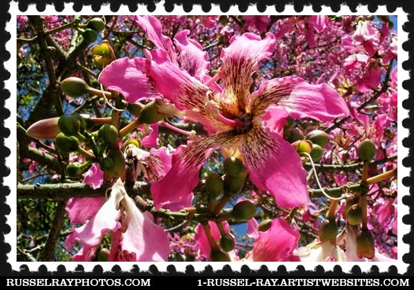 flower (21) floss silk tree flower stamp