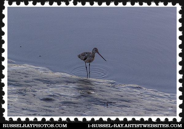 img_0357 san elijo lagoon stamp