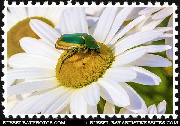 IMG_7344 green and gold bug altered faa stamp