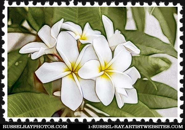 IMG_8353 faa stamp