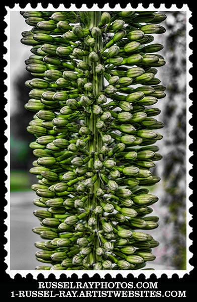 img_9432 blue agave stamp