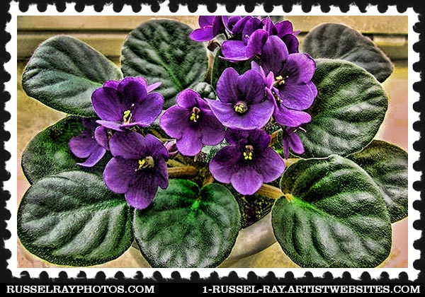 african violet faa stamp