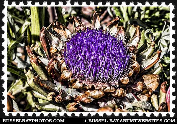 artichoke stamp